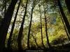 Bosque de Fabucao (Caso)
