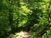 Bosque de los Arrebellaos