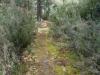 Un tramo del camino de bajada