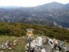 Pico Planton