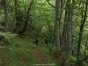 Bajando por el Bosque de la Foix