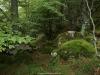 Bellos rincones  del Bosque