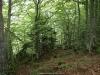 Bosque de la Foix