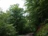 Frondosidad del bosque