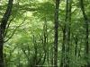 Otros rincones  del bosque