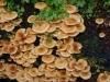 hongos en una corteza de un arbol