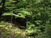 el bosque estaba espectacular