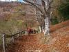camino hermoso al pasar por Anciu