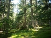 Bosque de Gerdar